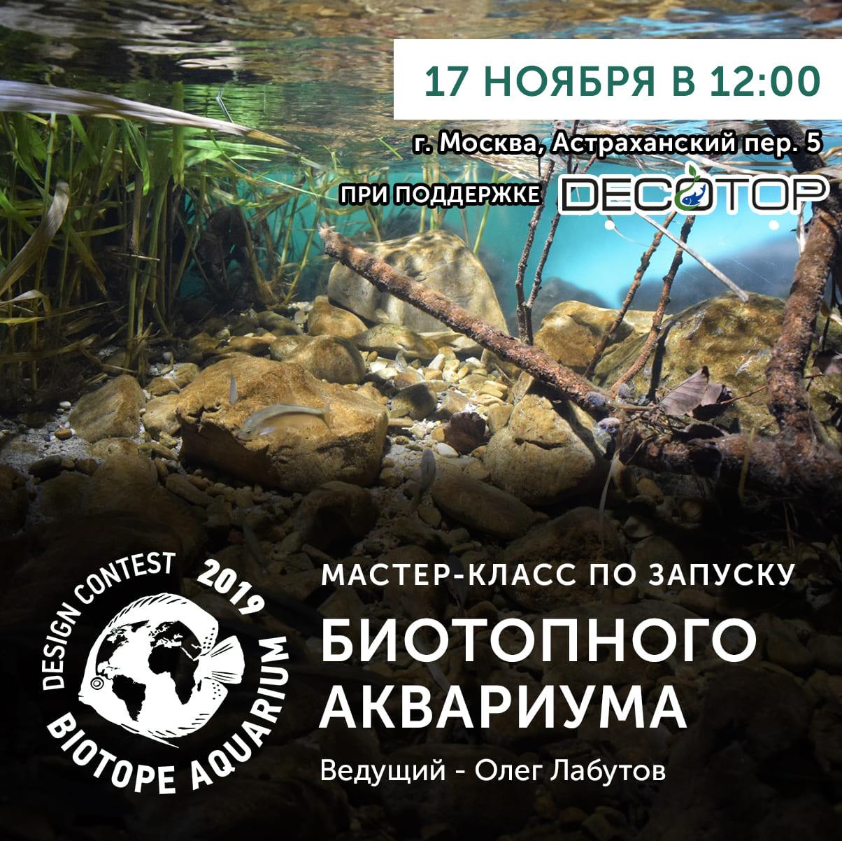 Мастер-класс по оформлению биотопного аквариума в Москве.