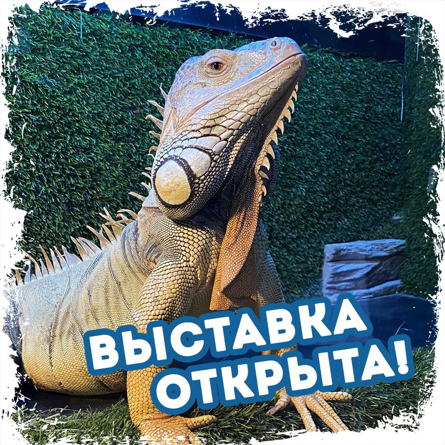 Выставка в ТРК Гранд Каньон открылась для посетителей!
