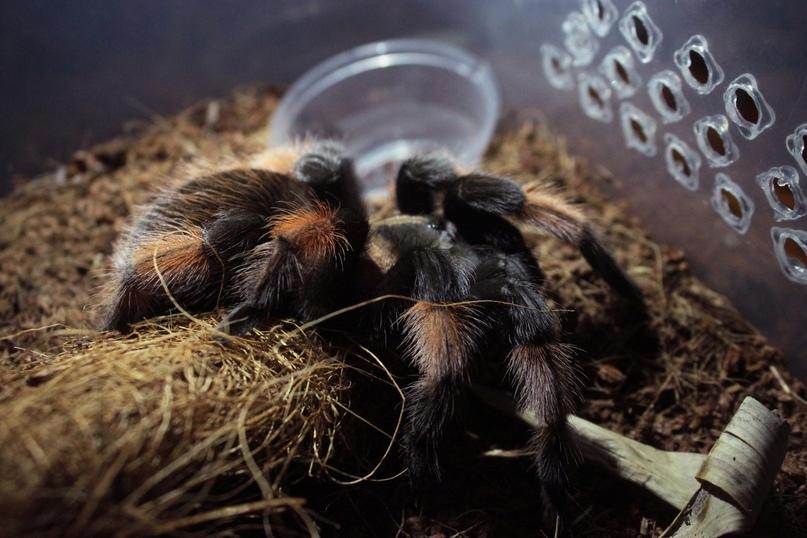 Влажность в террариуме у паука