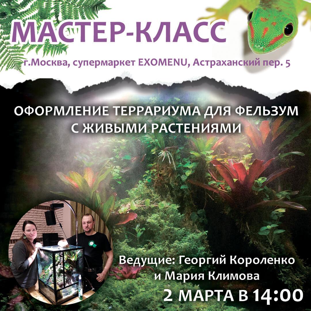 Мастер-класс по оформлению террариума для фельзум с живыми растениями