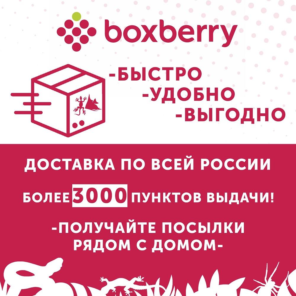 Доставка BOXBERRY теперь и в EXOMENU!