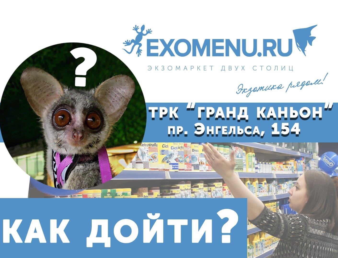 Как найти магазин EXOMENU в Гранд Каньоне?