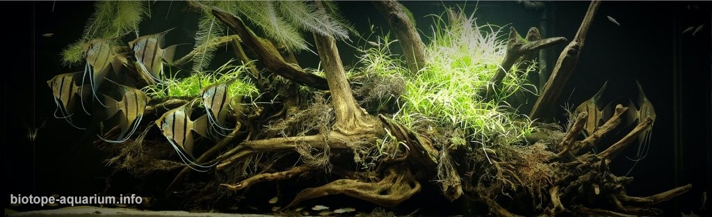 Flooded Banks of Rio Nanay, Peru During Rainy Season, 30_th place in Biotope Aquarium Design Contest 2020