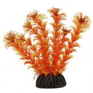 """Растение 1368 """"Амбулия"""" оранжевая, 100мм, (пакет)"""