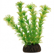 "Растение 1367 ""Амбулия"" жёлто-зеленая, 100мм, (пакет)"