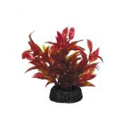 """Растение 0805 """"Альтернантера"""" красная, 80мм, (пакет)"""