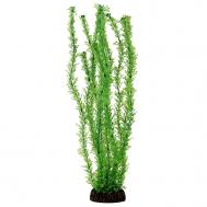 """Растение 13138 """"Лигодиум"""" зеленый, 100мм, (пакет)"""