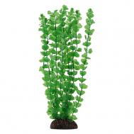 """Растение 13139 """"Бакопа"""" зеленая, 100мм, (пакет)"""