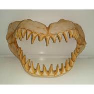 1003 Грот Декси - Череп динозаврам 30*12*18 см