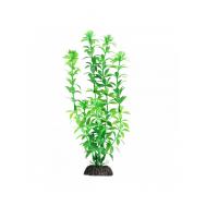 """Растение 1048LD """"Гемиантус"""" зеленый, 200мм, (пакет)"""