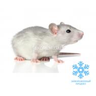 Крыса бегунок (5 шт. в пакете вакуумном)