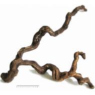 Коряга комель виноградной лозы, L (60-80 см)
