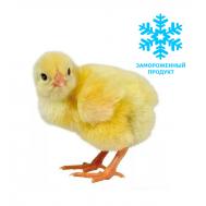 Замороженные суточные цыплята (10шт)