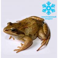 Лягушка кормовая замороженная (разные размеры)
