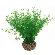 """Растение 1902AR с распылителем """"Бакопа мелколистная"""" зеленая, 70*70*200мм, (блистер)"""