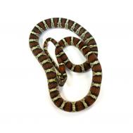 Королевская мексиканская змея