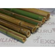 Ствол бамбука обожженный/зеленый 0,6м