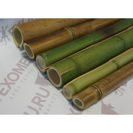 Ствол бамбука обожженный/зеленый 0,45м