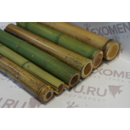 Ствол бамбука обожженный/зеленый 0,3м