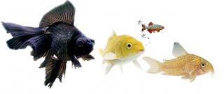 Статьи по аквариумистике