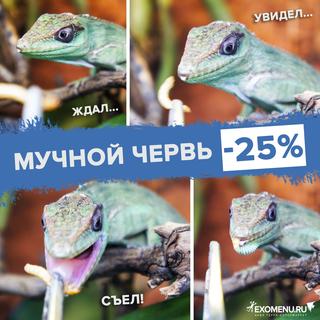 Мучной червь - 25%!
