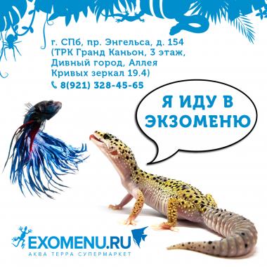 Режим работы EXOMENU до особого распоряжения.