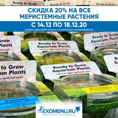 Скидка 20% на меристемные растения!