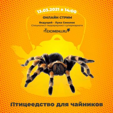 Птицеедство для чайников! Онлайн стрим во ВКонтакте 13 марта.