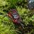 Краб красный мангровый, 3 см