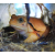 Лягушка-помидор M