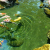 Oase AquaActiv AlGo Direct 5 л, ср-во против водорослей