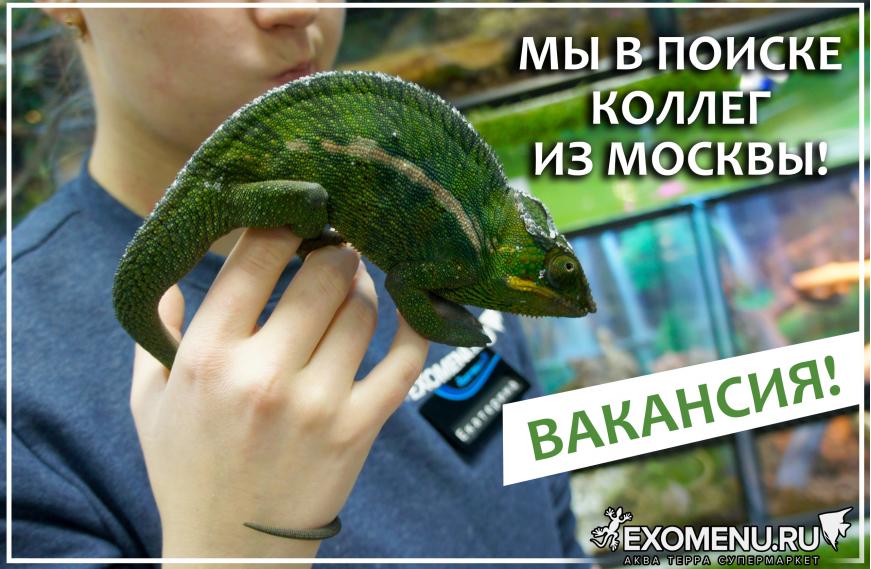 Вакансия в Москве!