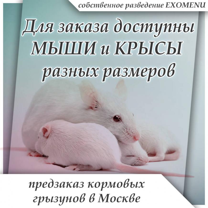 Предзаказ кормовых грызунов в Москве!