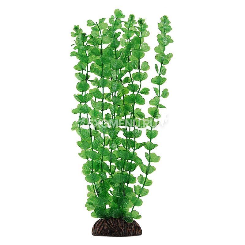 Растение 13139