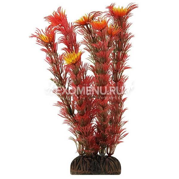 Растение 4687