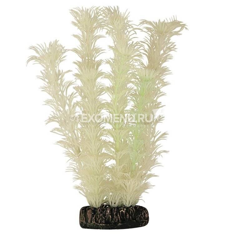 Растение светящееся