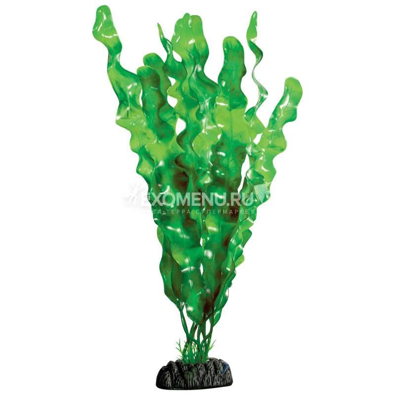 Растение 3092