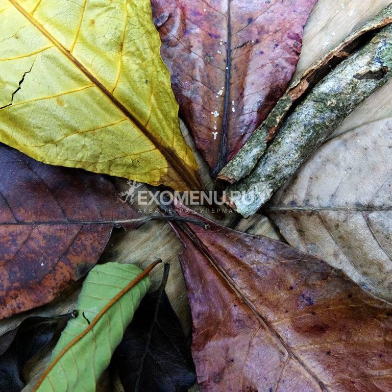 DECOTOP Ceylon 2 - Набор листьев из Шри-Ланки 10-25 см, 10 шт.