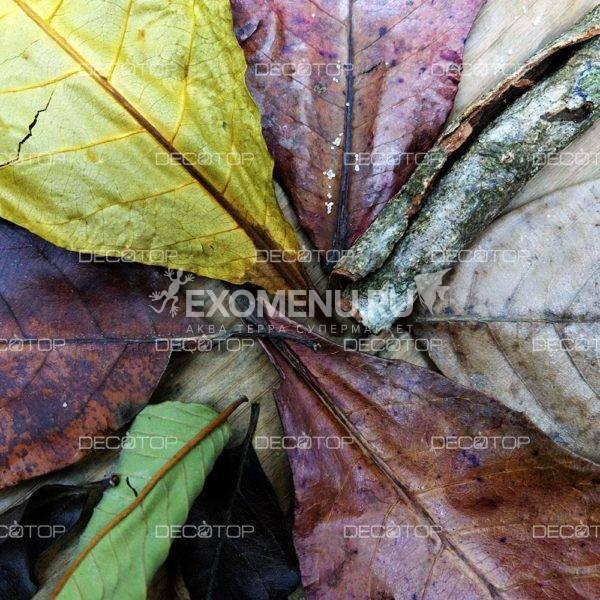 DECOTOP Ceylon 1 - Набор листьев из Шри-Ланки 10-30 см, 20 шт.