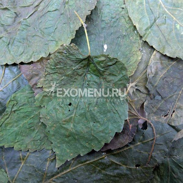 DECOTOP Mulberry XS - Листья белой шелковицы, 10-15 см, 10 шт.