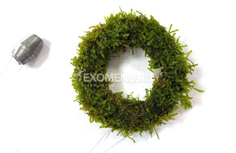 Мох Рожденственский аквадекор (рождественское кольцо)