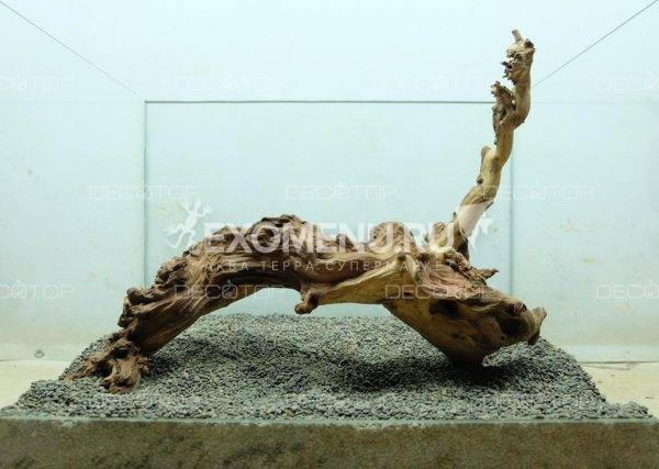 DECOTOP Sumatra L – Натуральная коряга 17- 55 см для аквариумов от 30 л