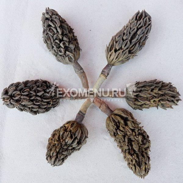 DECOTOP Magnolia fruit S – Плод магнолии 6-8 см, 1 шт
