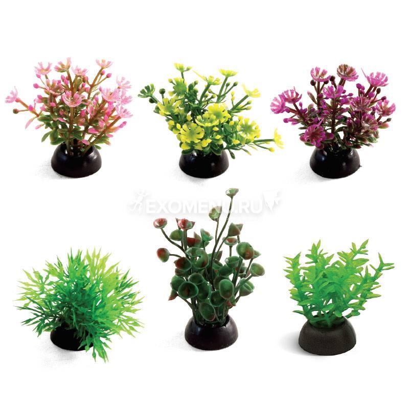 Растения разноцветные (набор 6шт), 50мм, Laguna