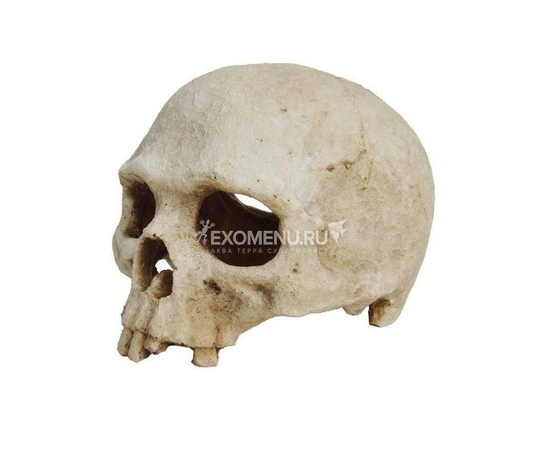 LUCKY REPTILE Декорация для террариума, череп