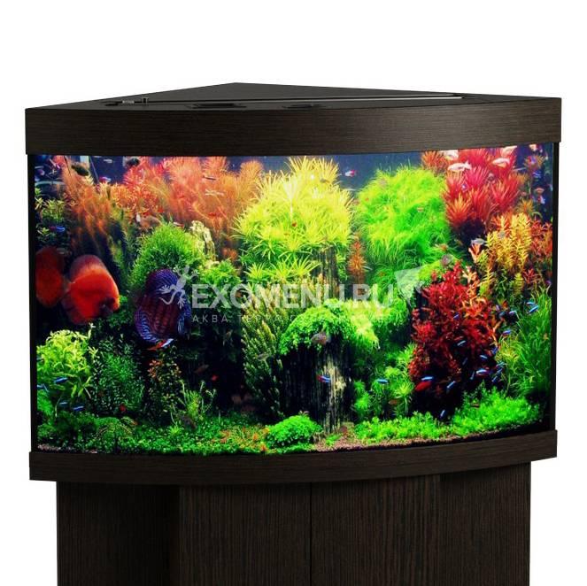 Аквариум Biodesign ДИАРАМА 200 (венге) без свет-ка с покр. крышками, стекло Pilkington Optifloat™ (полированная еврокромка), 8-10 мм 185 л, 71*71*65 см, шторка д/кормления