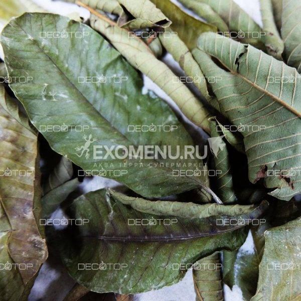 DECOTOP Guava XXS - Листья гуавы, 5-10 см, 20 шт.