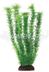 Растение 1393