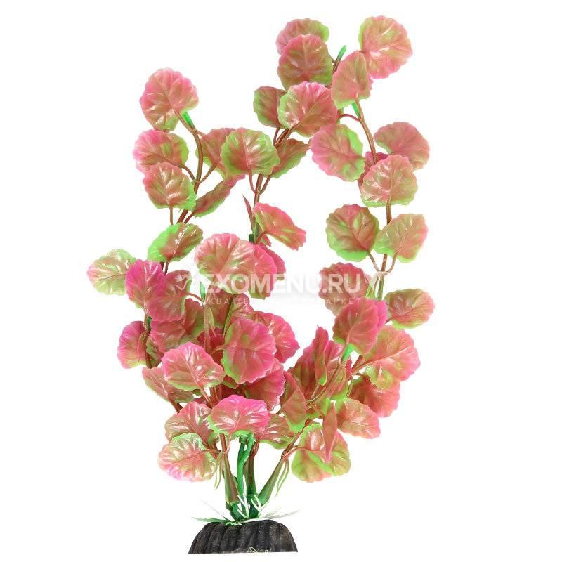 Растение 1034LD