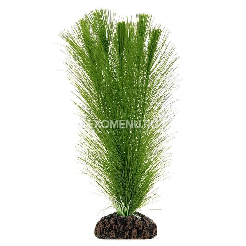 Растение 1706